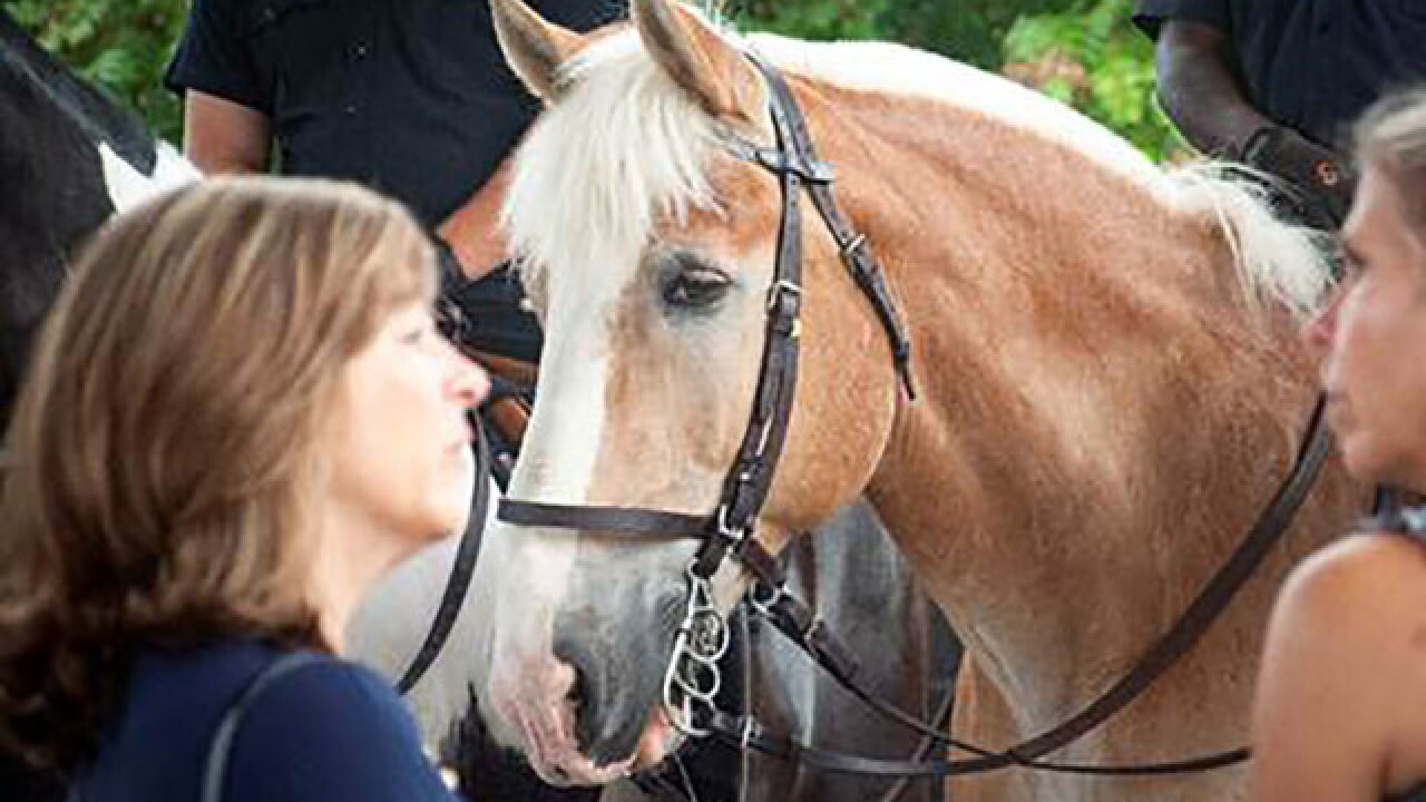 Baltimore Mounted Police Sgt. and his horse honored at Washington horse show
