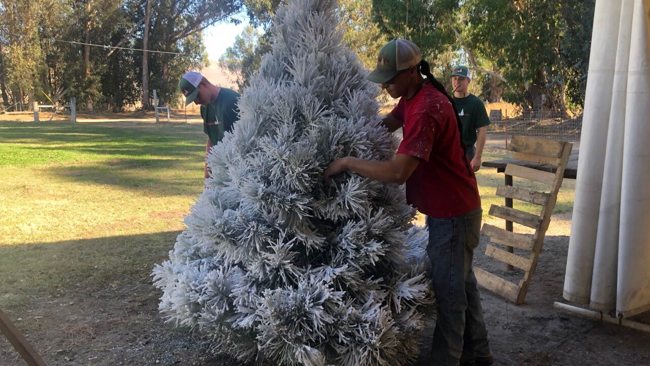 Tis The Season To Pick And Cut Down Your Favorite Tree At