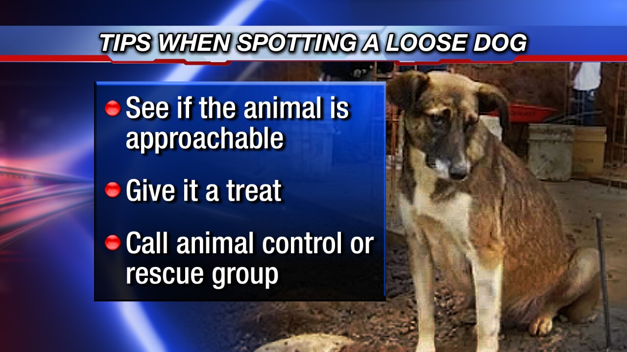 tips for loose dogs 0323.jpg