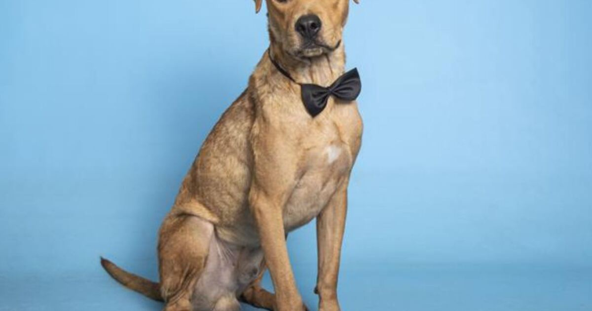 Adoptable pets from Arizona Humane Society and Maricopa County Animal Care (11/25/20)