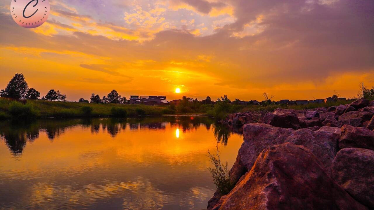 Falcon sunset