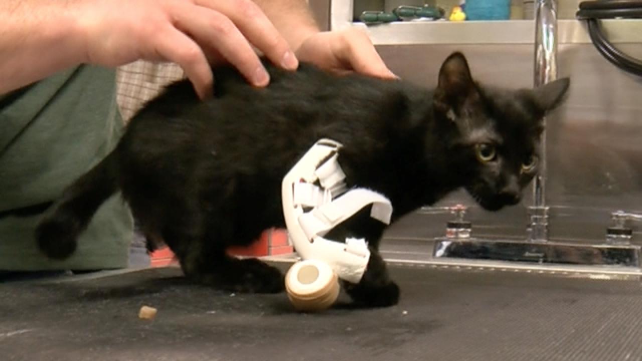 Kitten gets 3D-printed prosthetic limb