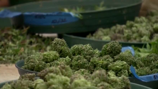 Report: Crashes up in states that legalized pot