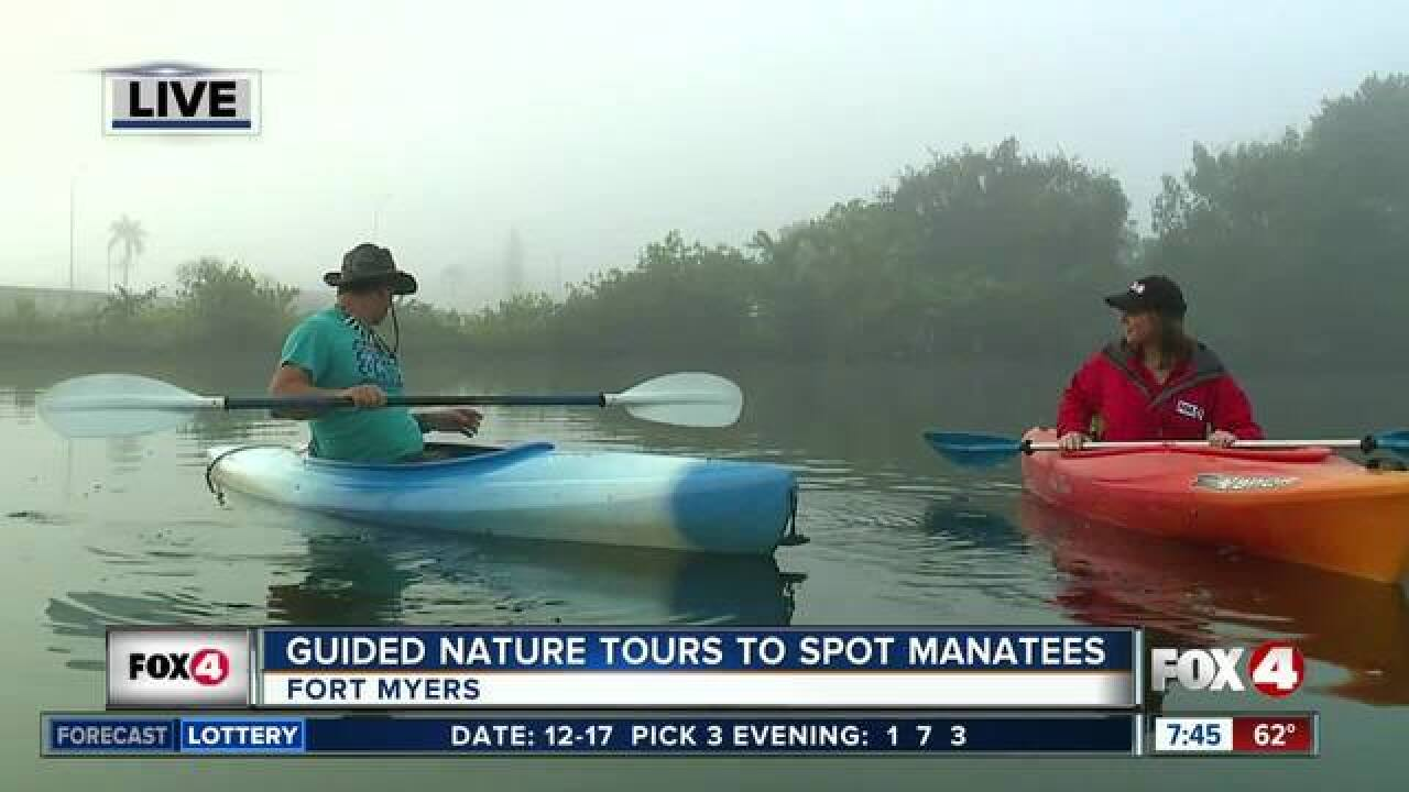 Kayak Nature Tours help spot manatees in SWFL