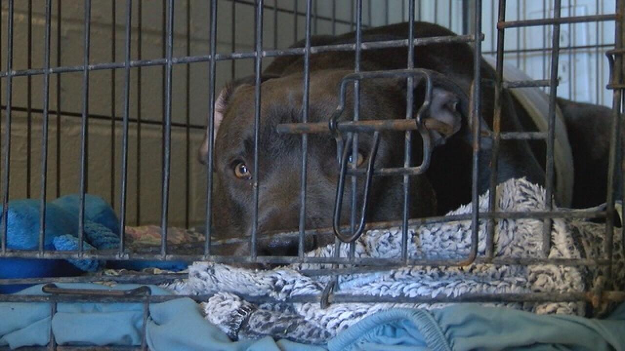 Dog survives after being shot in midtown yard