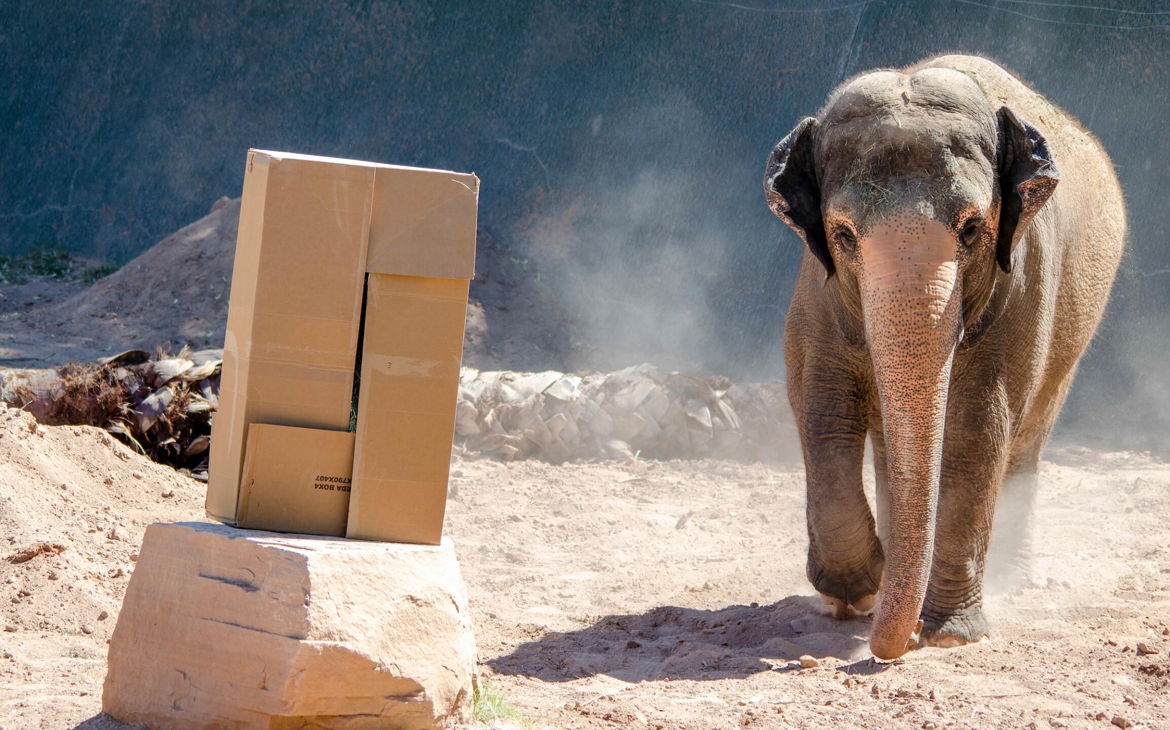 Reba Asian Elephant Phoenix Zoo - Handouts18.jpg