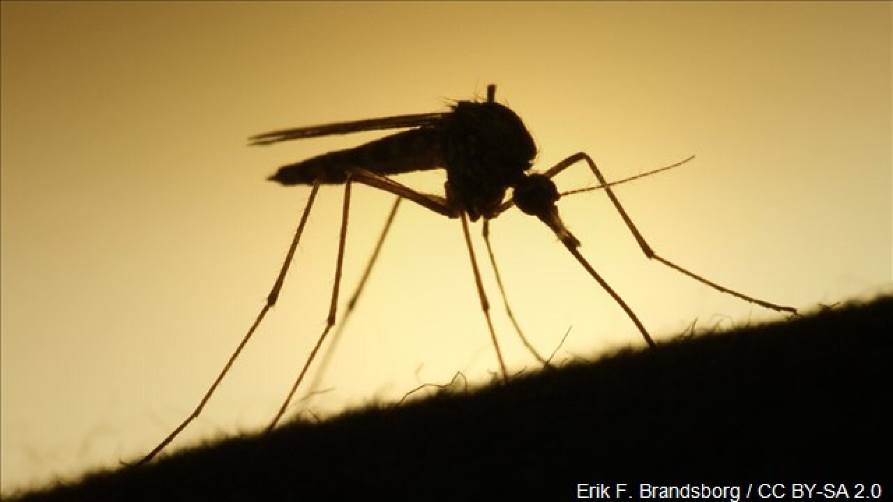 Salt Lake and Washington counties report first human West Nile Virus cases of2019