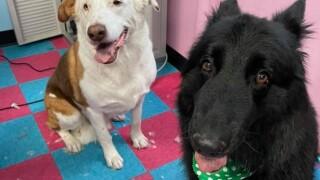 Snoopy & Lexa
