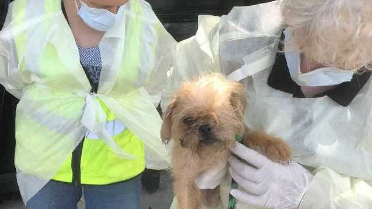 Nearly 40 animals seized from Wisconsin home