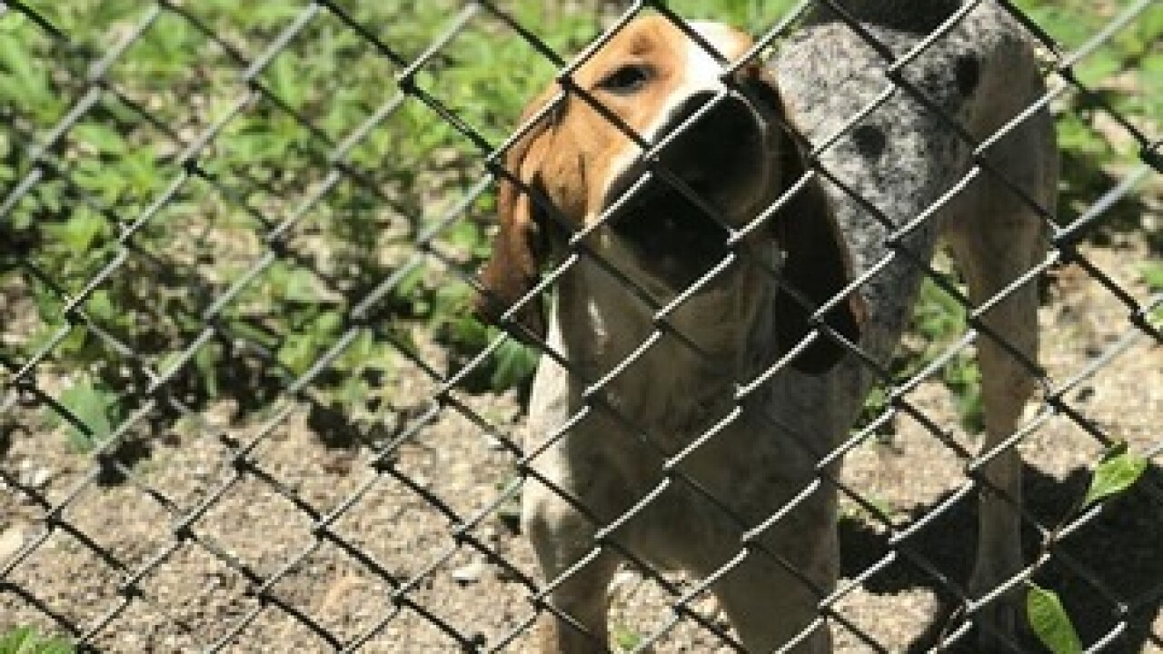 Neglected dog needs home after year at shelter
