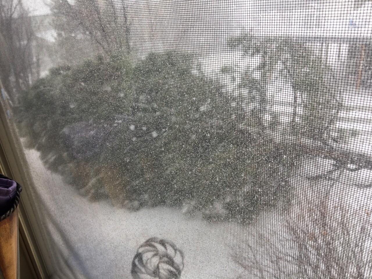 Tree down in Centennial by Aurora Stein at 1233pm 2.jpg