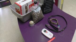Pet preparedness in disasters