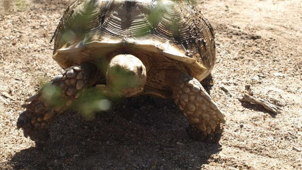 Can you find this wayward tortoise?