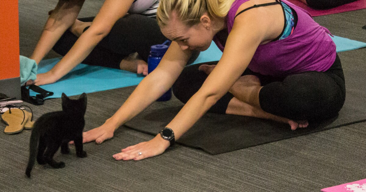 Purrfect! Kitten Yoga is coming to Scottsdale this summer