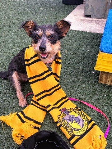 PHOTOS: Orlando shelter sorts animals into Harry Potter-themed houses