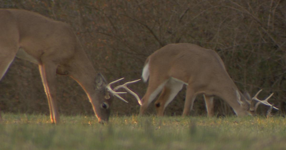 Take a shot at hunting on Free Hunting Day