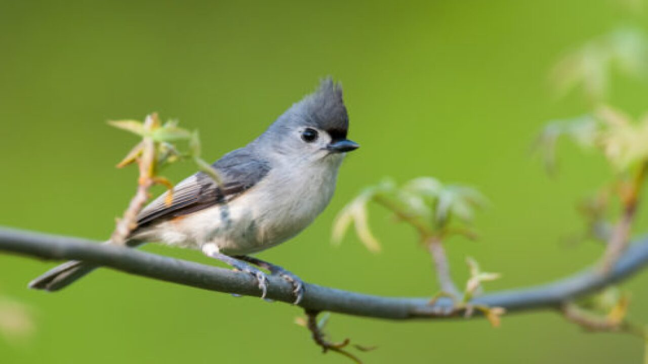 Programs To Reduce Air Pollution Have Saved 1.5 Billion Birds In The US