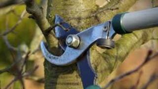 "Menards Home Improvement Topic: ""Fall Pruning"""