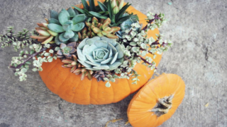 Succulent Pumpkins Are The Most Gorgeous Fall Decorations