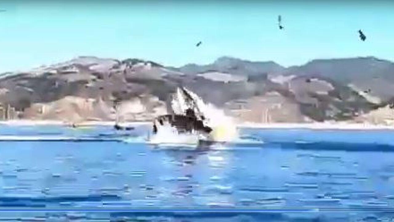 Whale kayak.JPG
