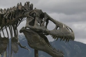 Museum of the Rockies plans a phased reopening next week