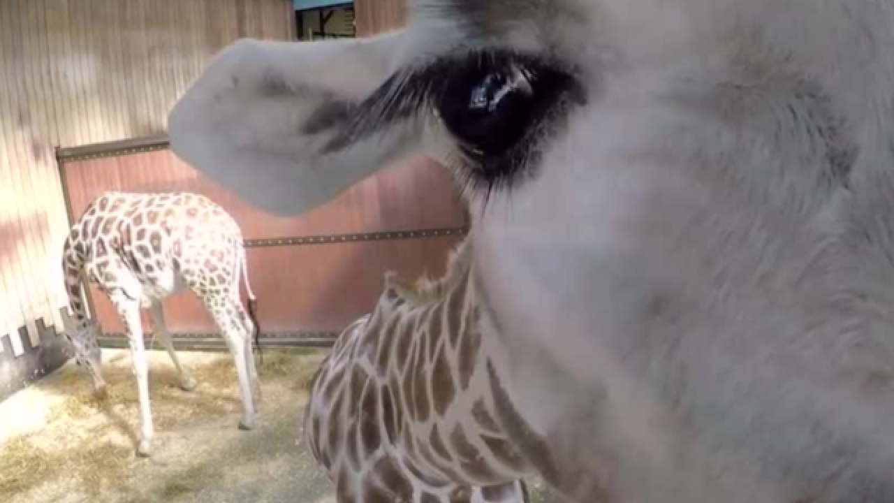 Watch: Milwaukee zoo's 'bloopers' video is too cute