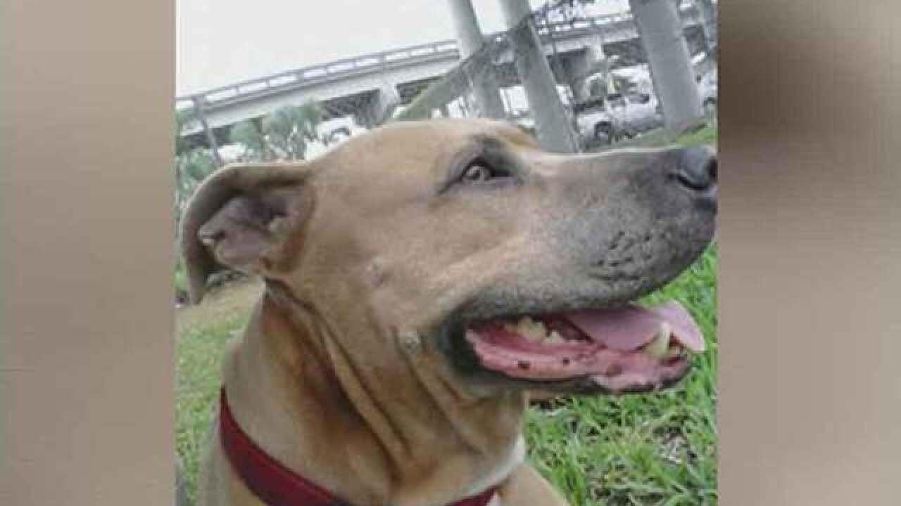 Dog dies saving Florida owner from alligator