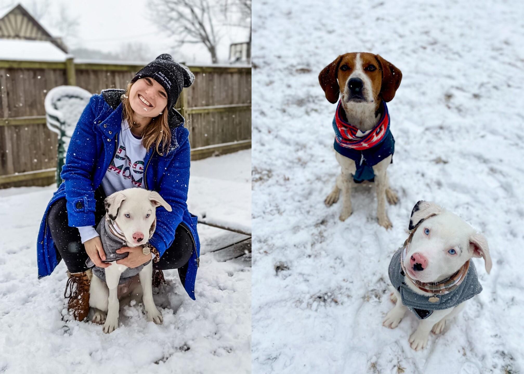Abby's snow pups.jpg