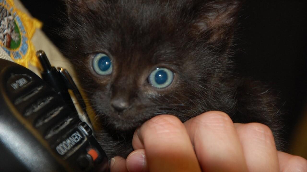 honor farm kitten 3.jpg