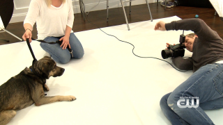 Furry Fix: Honor A Pet InRover