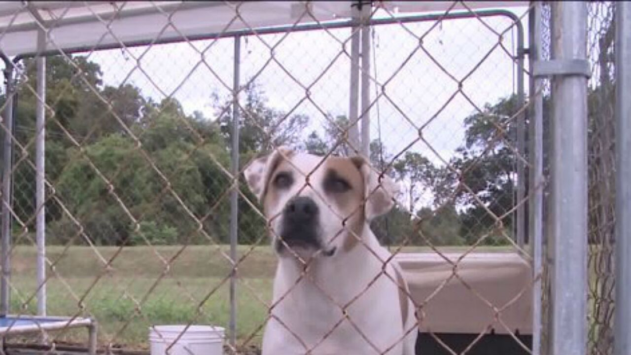 If you're cold, they're cold; Local ordinances protect pets in severeweather