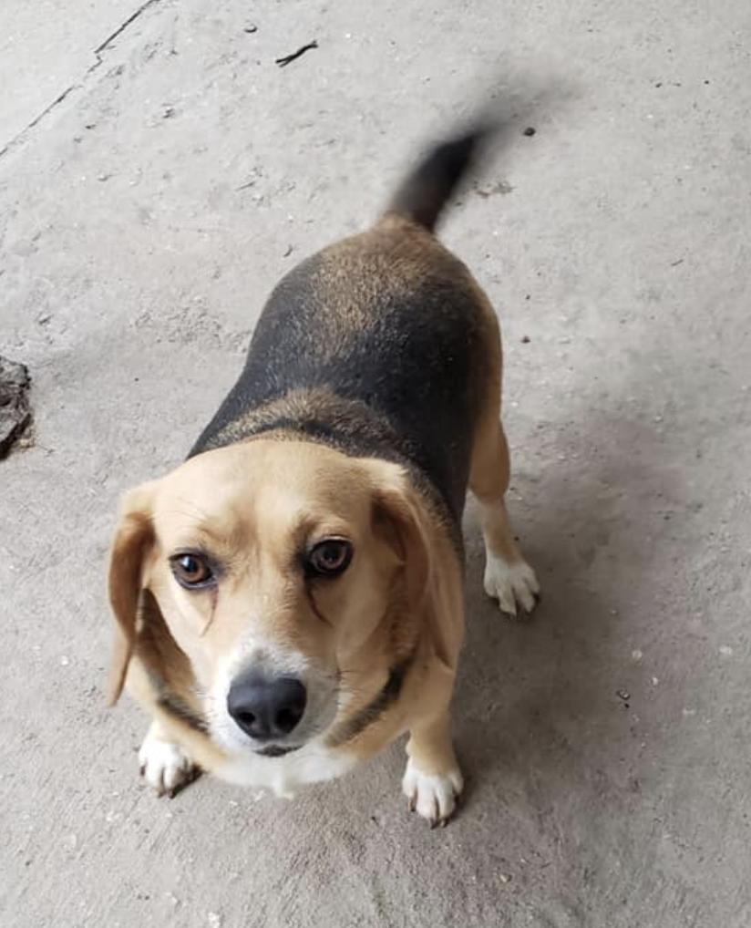 Bodette, PC: Echols Animal Rescue