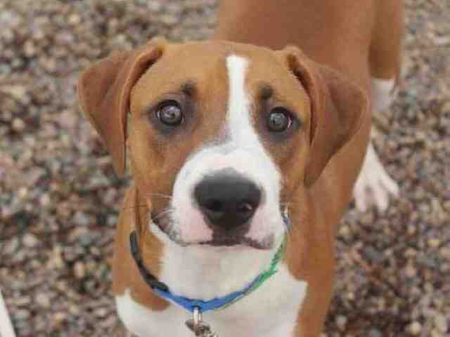 Adoptable pets available at Arizona Humane Society and Maricopa County Animal Care (10/16)