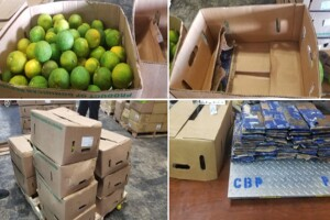 46 pounds of cocaine found hidden in shipment of oranges at Port Everglades