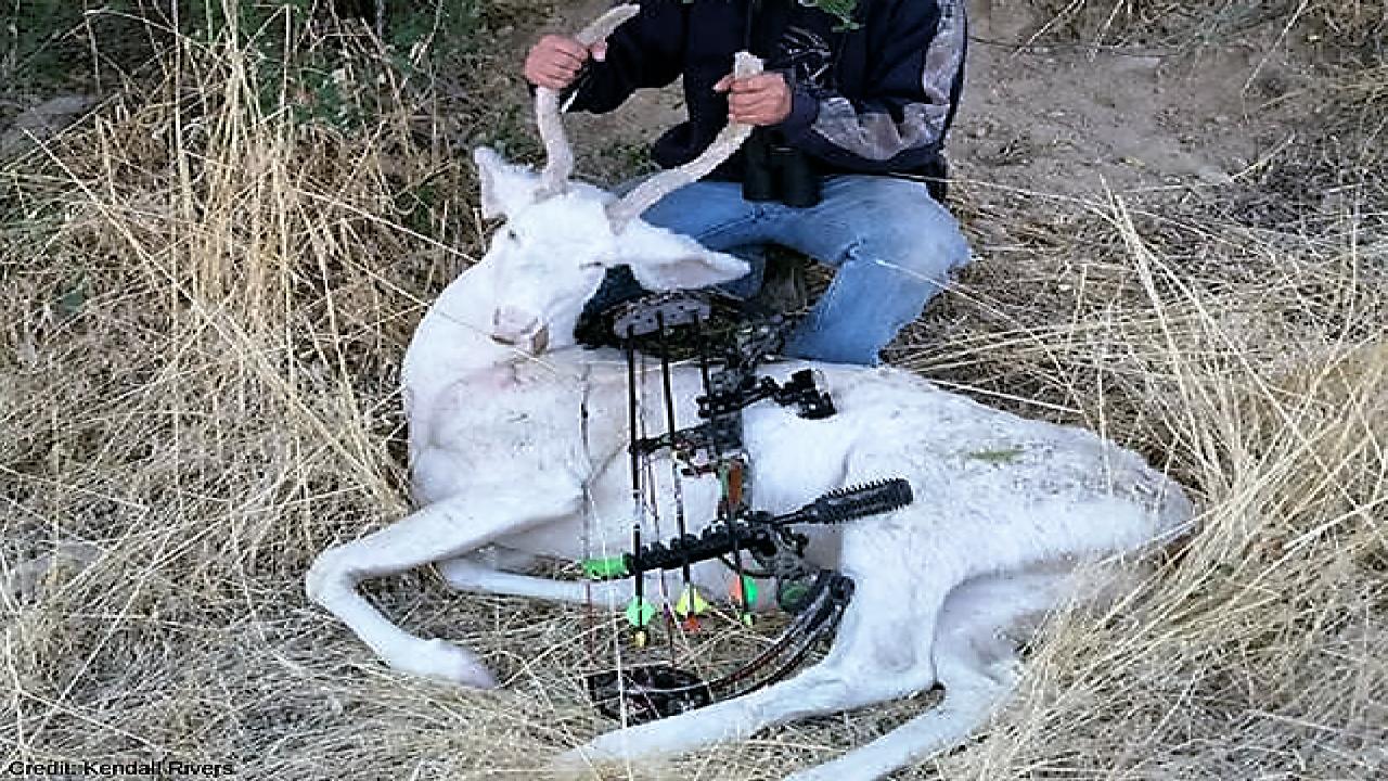 Criticism after rare albino buck shot by Idaho hunter