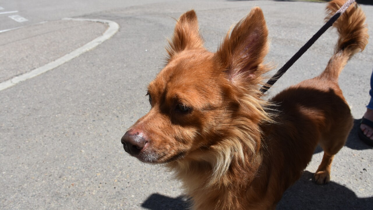 Dog named Roadrunner escapes coyote in chase down Vista street