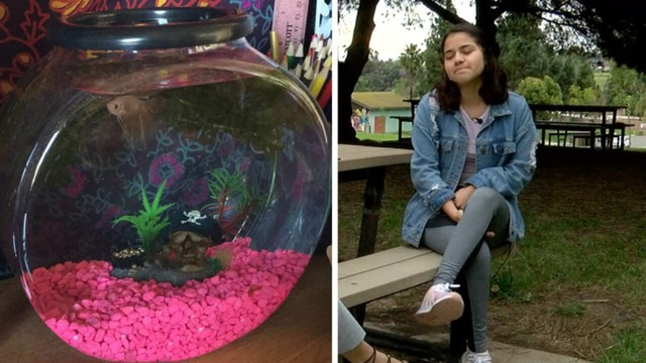 Student heartbroken, humiliated after being forced to give up pet fish prior to Southwest flight