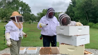 Beekeeping, farming programs help Veterans with PTSD symptoms