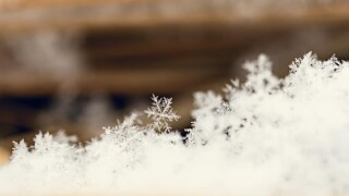 Lisa Salzman snowflake