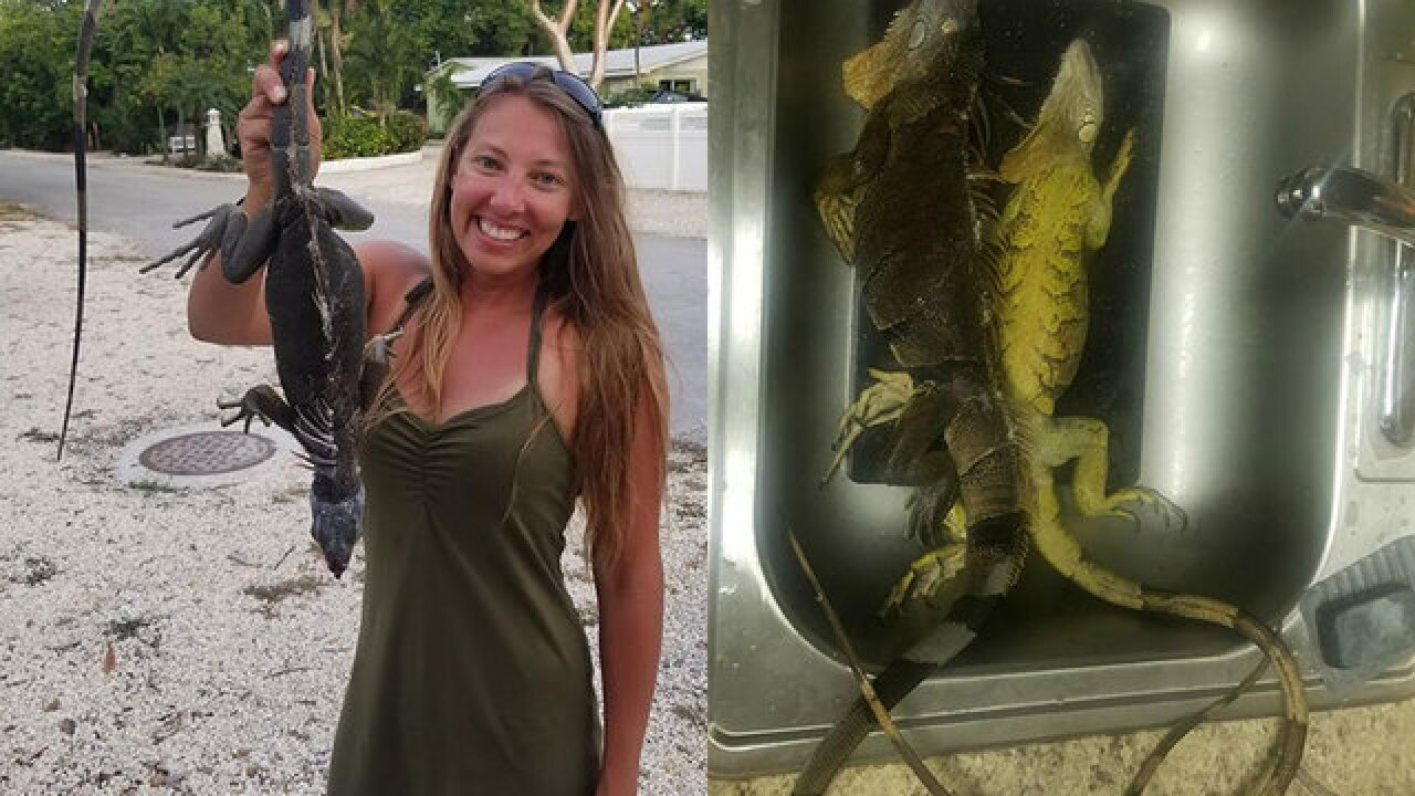 People are eating iguanas in Florida