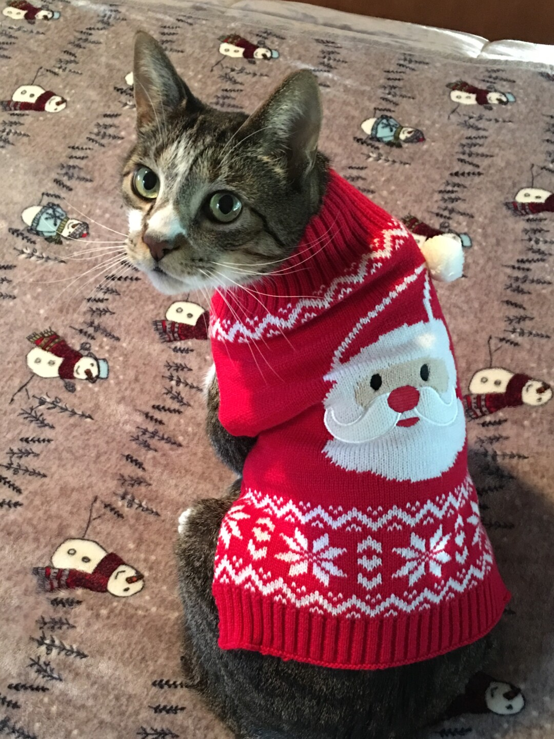 Jasper doesn't think his sweater is ugly 😉 Merry Christmas from Jasper and family!!  💕🐱 🎅🏻 🌲 👼