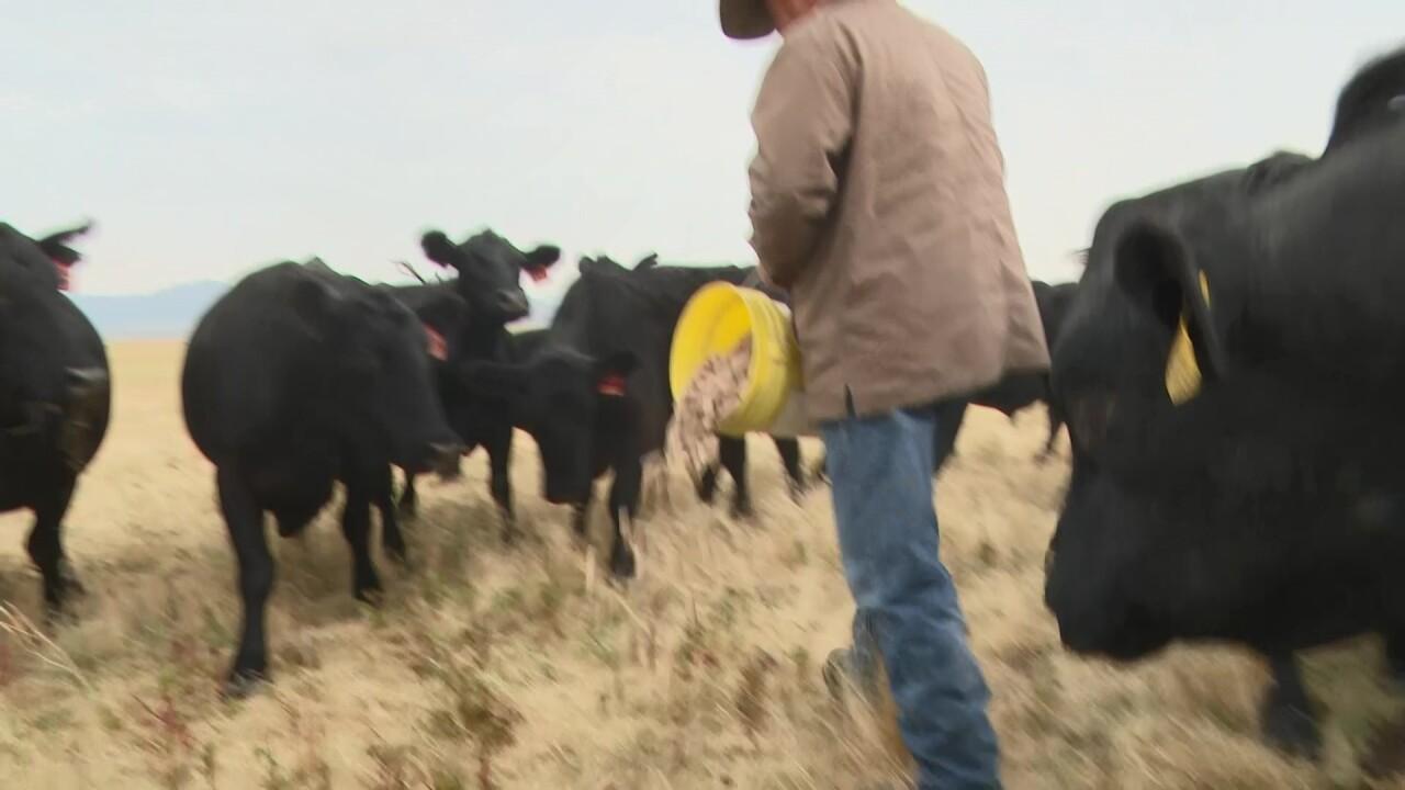 Malek Angus Ranch owner Ty Malek