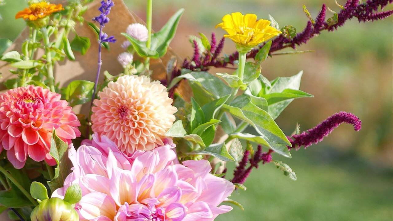 P&D Flower Farm offers safe distraction from pandemic stresses
