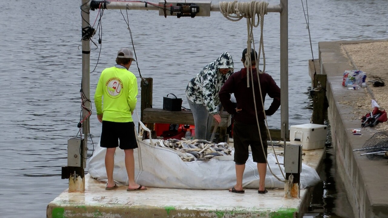 Padre Island fish kill.jpg
