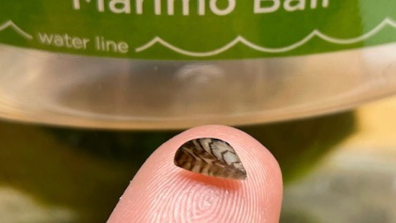 Idaho officials find invasive mussels in aquarium products