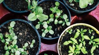 garden-plants-gardening-soil-2847908.jpg