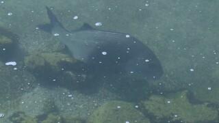 WPTV-fish-042220.jpg