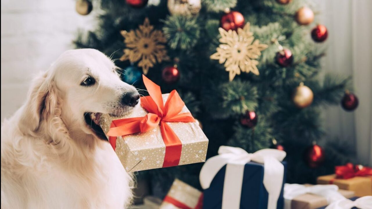 Best Dog Christmas Presents 2020