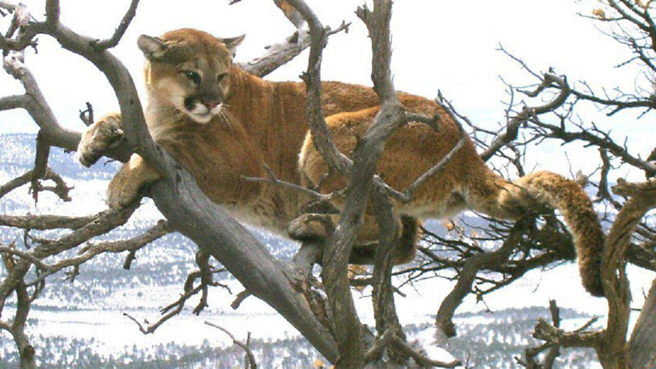 Trail runner suffocates, kills mountain lion in self defense