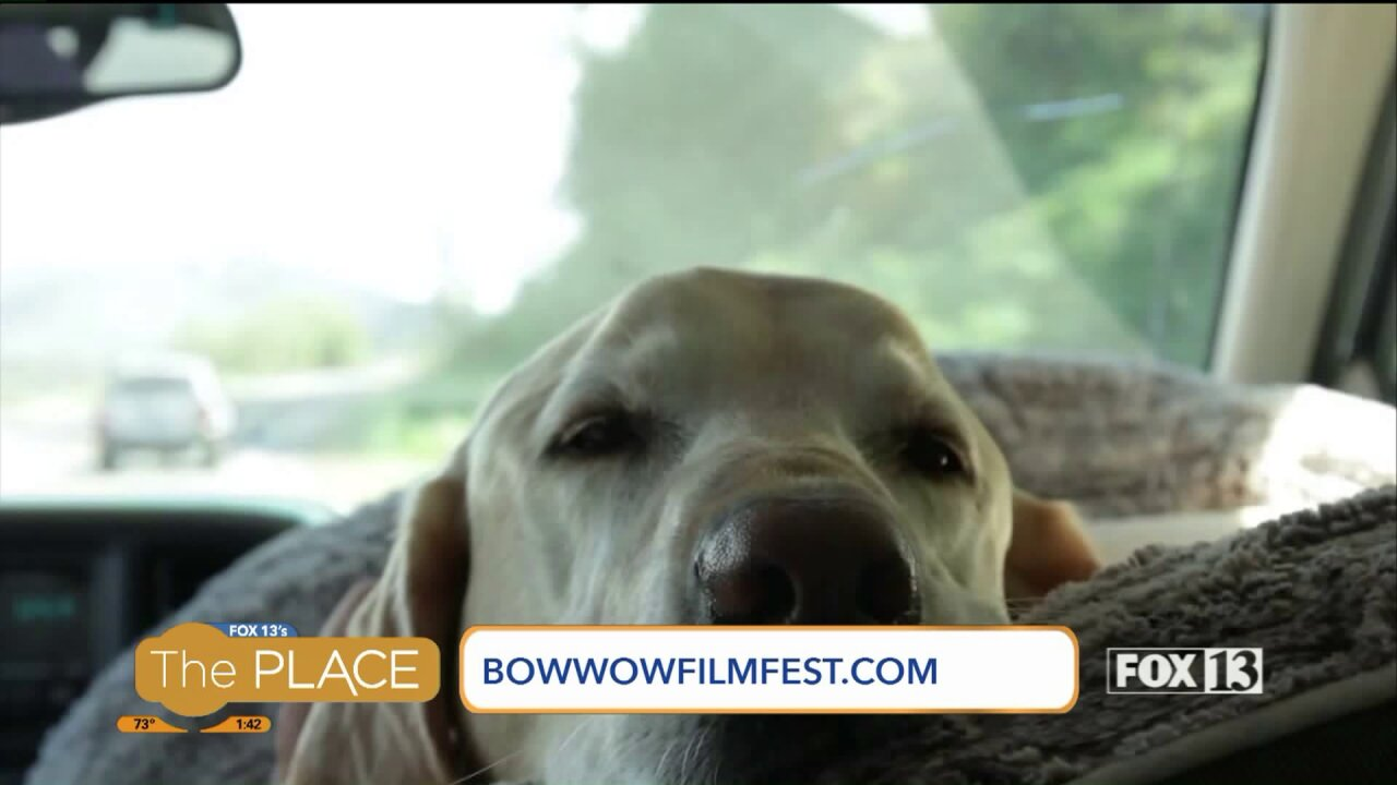 A film festival that's all aboutdogs